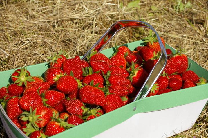 la cueillette des fraises est ouverte les blogs. Black Bedroom Furniture Sets. Home Design Ideas